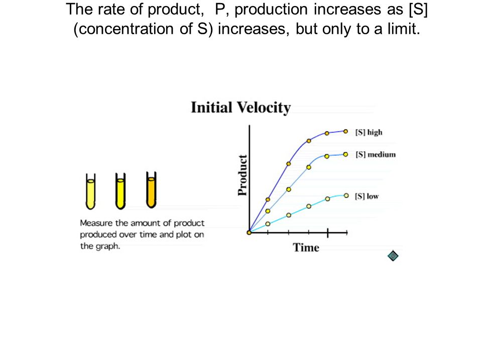 The rate of product, P, production increases as [S] (concentration of S) increases, but only to a limit.